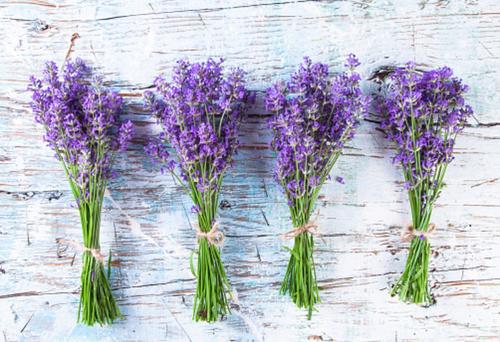 Mit Diesen 5 Pflanzen Im Schlafzimmer Gehoren Deine Schlafstorungen