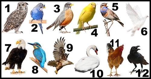 What Does Your Birth Month Bird Say About You