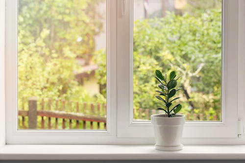 15 Indoor Plants That Bring Positive Energy Into Your Home