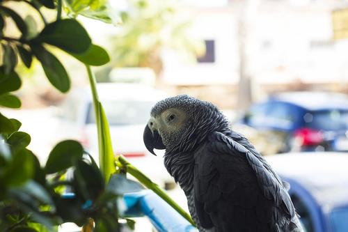 Elderly Woman Tells Her Parrot 'I Love You' One Last Time