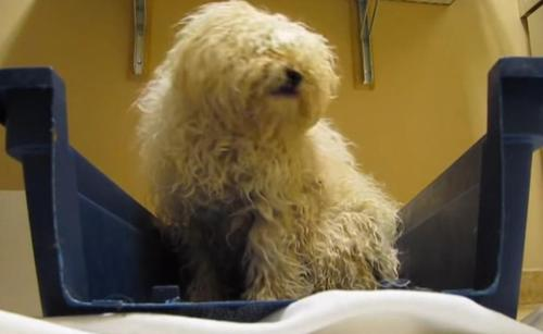 Image result for Man Rescues Terrified Dog 1 Hr Before Being Put Down: Reaction When Saved Has Everyone Teary Eyed