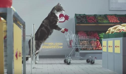 Germany's Supermarket Cat Commercial