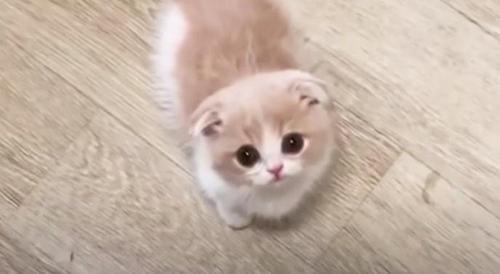 Cat bosanski video Cats Organized