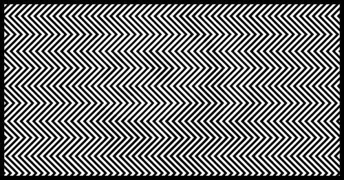 Na obrazku ukryto zwierzę. Tylko 1% ludzi potrafi je dostrzec