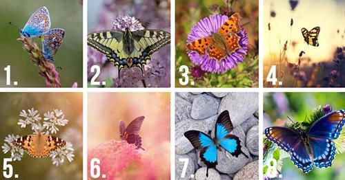 Tes kepribadian - Kupu-kupu yang kamu pilih dapat mengungkap rahasia terdalam dari sifat aslimu.