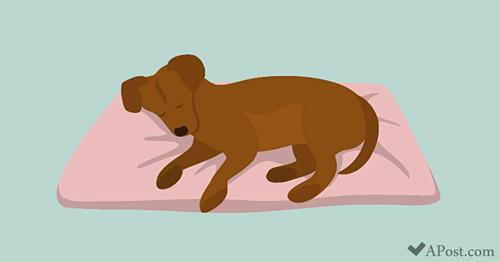 6 Puppy Sleeping Positions That Reveal A Lot About Your