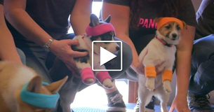Puppies Can Fix Boredom. Watch And See!