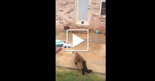 You Have To See This Epic Cat Door Fail