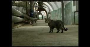 These Cats Have A Special Mission...When You See What It Is You Will Be Amazed!