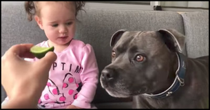 A Dog And Baby Taste Lime For The First Time. Their Reactions Are So Alike And Hilarious