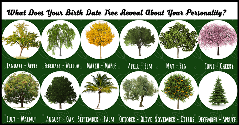 Image result for Birth Month Tree