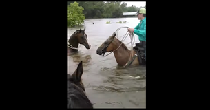 Knight In Shining Armour of Cowboys! Cowboy Rescues Trapped Horse As Water Rises FAST!