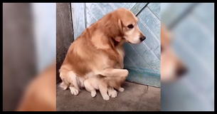 Dog Shields Its Puppy From The Horrors Of The Modern World