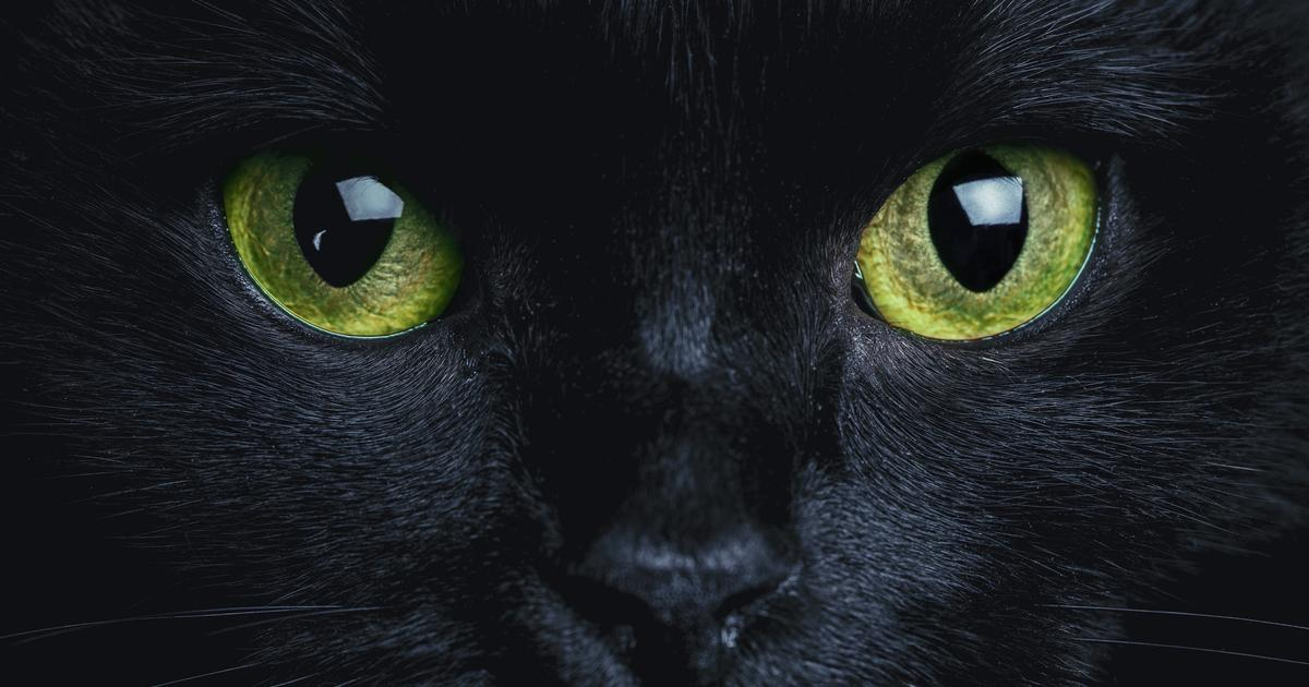 CATS: Having A Cat Protects Your Home From Ghosts And Evil Spirits