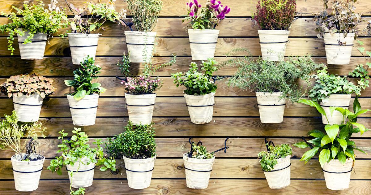 verbessere dein raumklima mit pflanzen und wehre krankheiten ab. Black Bedroom Furniture Sets. Home Design Ideas