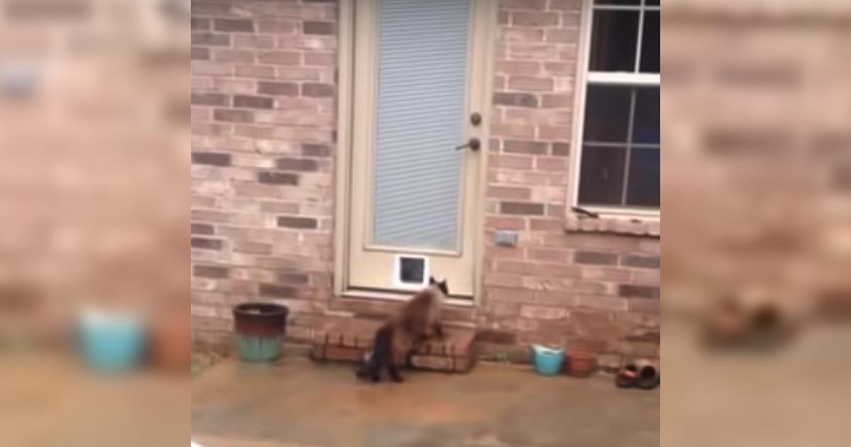 apr s des heures gal rer pour installer une chati re son chat entre en jeu de mani re hilarante. Black Bedroom Furniture Sets. Home Design Ideas