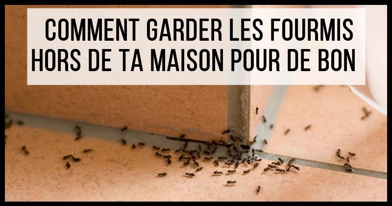 des secrets bon march pour loigner les fourmis de chez. Black Bedroom Furniture Sets. Home Design Ideas
