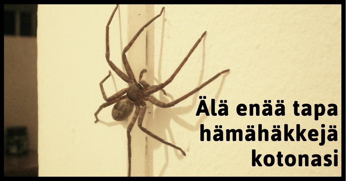Hämähäkin Tappaminen