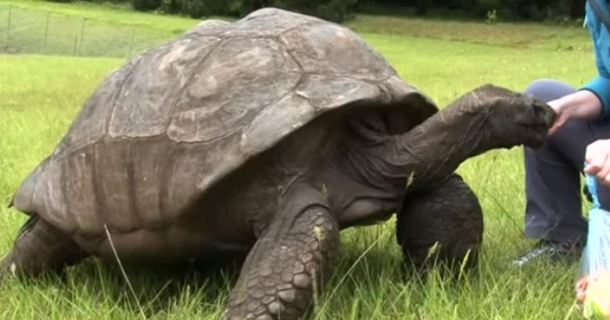 älteste Schildkröte