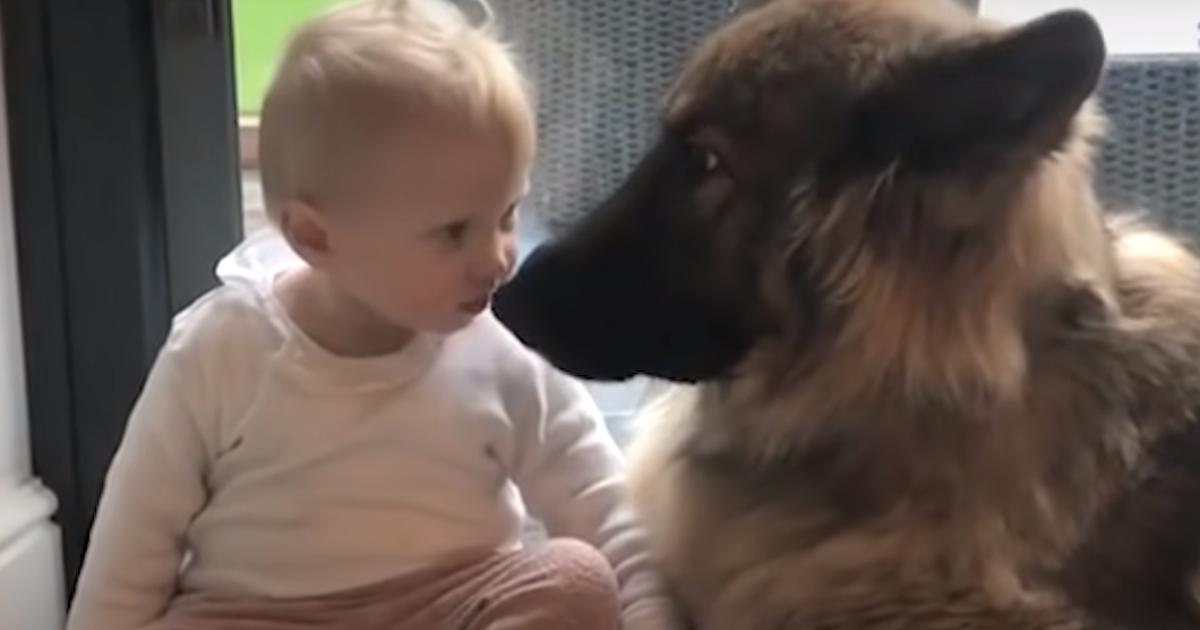 German Shepherd Cares Deeply For His Favorite Little Girl