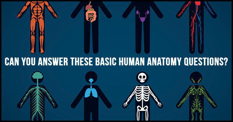Can You Answer These Basic Human Anatomy Questions