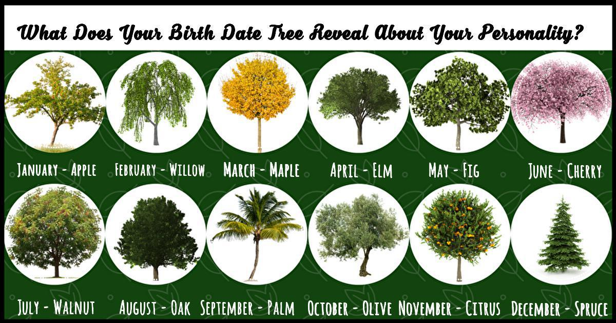 What Does Your Birth Month Tree Reveal About Your Personality?