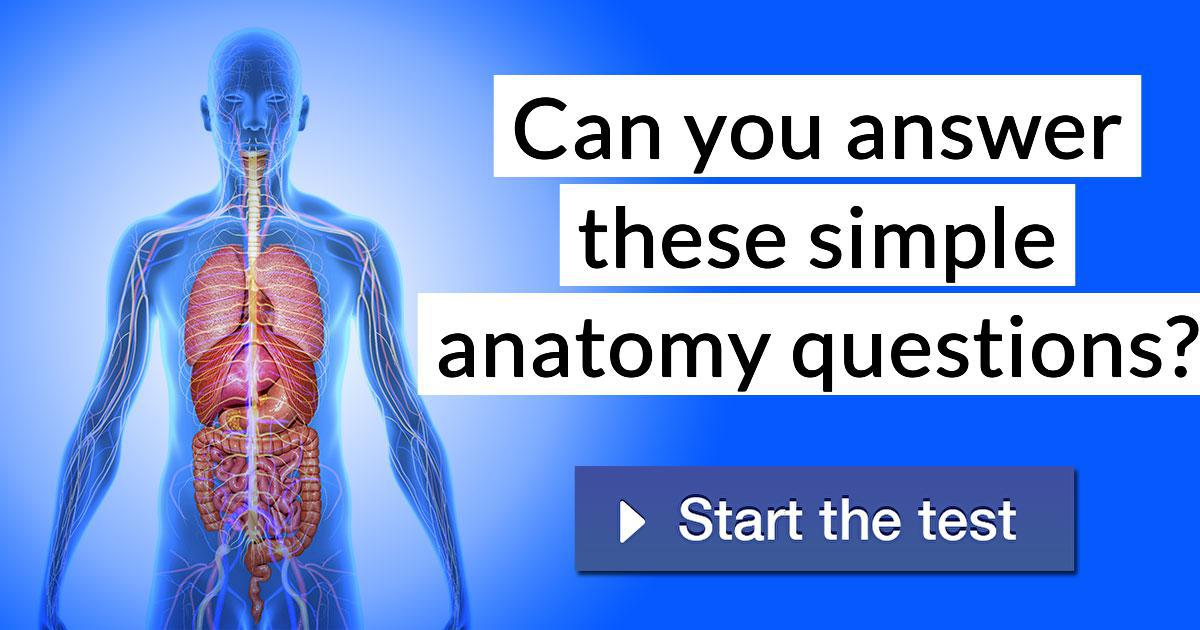 Can You Answer These Simple Anatomy Questions