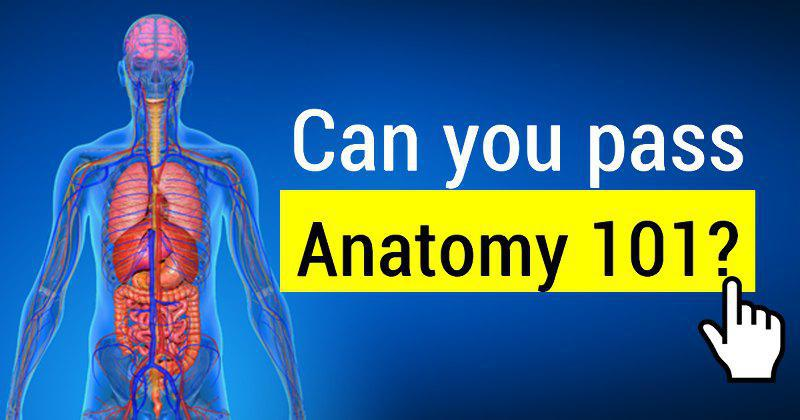 Quiz How Well Will You Score In Anatomy 101